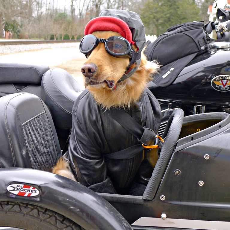 Took to dogs campin'      Adventure Rider